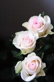 Rosen hintergrund — Stockfoto