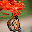 Butterfly — Stock Photo #6874749