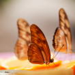 Butterfly — Stock Photo #6874760