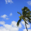 Stock Photo: Storm in Paradise