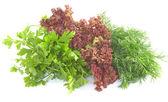 свежая петрушка, укроп и салат на белом — Стоковое фото