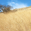 Dry tree and yellow grass on Karadag mountain. Black Sea, Crimea — Stock Photo #7093661