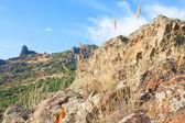 Hierba seca en karadag montaña. crimea, ucrania — Foto de Stock
