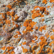 Lichens on rock, texture, abstract background — Stock Photo
