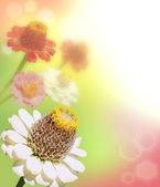 Margherite gerbera colorati su uno sfondo scintillante — Foto Stock