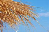 Widok na niebo przez suche liście — Zdjęcie stockowe