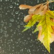 Fall leaves on wet background with water drops - Stock Photo