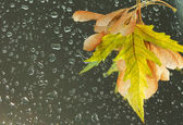 Fall leaves on wet background with water drops — Stock Photo