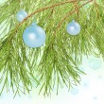 Decoration balls on pine branch, beautiful background — Stock Photo