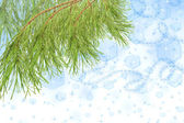 Pine branch on Christmas background — Stock Photo