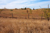 Barbed wire fence and dry grass — Stock Photo