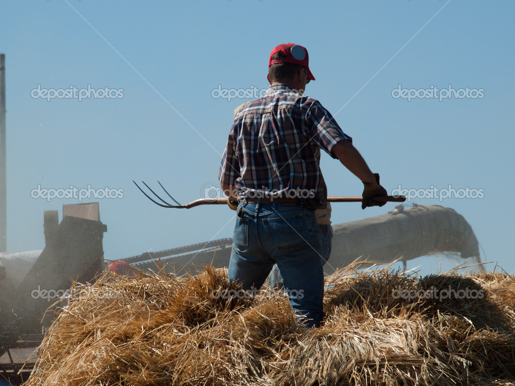 Men harvesting hay with old farm equipment.  Stock Photo #6840651