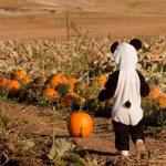 Toddler in Halloween Costume — Stock Photo