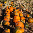 Pumpkins — Stock Photo #7165173