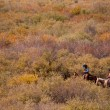Stock Photo: Cattle Drive