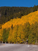 Bicycling in Fall Aspen Trees — Stock Photo