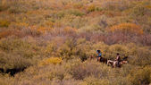Cattle Drive — Foto Stock