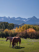 Autumn on the Ranch — Stock Photo