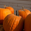 Pumpkins — Stock Photo #7269131
