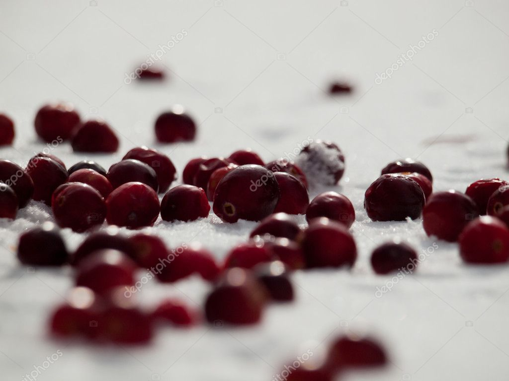 Fresh cranberries in the snow. — Stock Photo #7695229