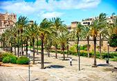 Cathedral La seu. Palma de Mallorca. mediterranean — Stock Photo