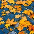 Leaves on cobblestones. autumn time — Stock Photo #7828338