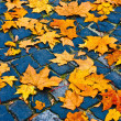 Leaves on the cobblestones. autumn time — Stock Photo