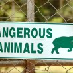 Dangerous animals sign — Stock Photo