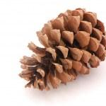 Pine cone — Stock Photo #6938090