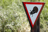 Bugs crossing! — Stock Photo