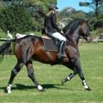 Horse rider — Stock Photo #7342841