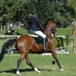 Horse riding — Stock Photo