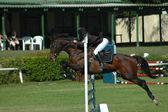 Horse jumping sport — Stockfoto