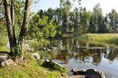Piccolo isolotto nel lago silenzioso — Foto Stock