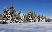Land Winterszene — Stockfoto
