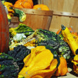 Autumn Gourds — Stock Photo #7021679