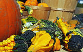 Autumn Gourds — Stock Photo