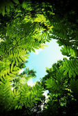 Copa de árbol — Foto de Stock