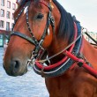 Horse in the city — Stock Photo
