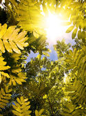 Tree canopy — Stockfoto