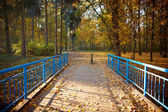Blue bridge in the forest — Stock Photo