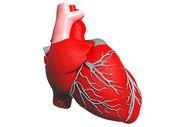 Model of artificial human heart — Stock Photo