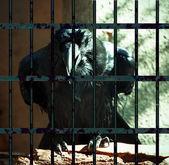 常见的乌鸦 — 图库照片