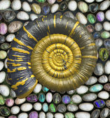 Ammonite sur pierres colorées humides — Photo