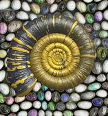 Ammonit ıslak renkli taş — Stok fotoğraf