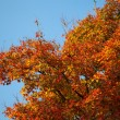 Herbst Baum — Stock Photo