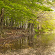Green forest reflection on water — Stock Photo