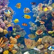 Colorful and vibrant aquarium life — Stock Photo #6920002