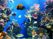 Colorful and vibrant aquarium life — Stock Photo