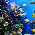 Colorful and vibrant aquarium life — Stock Photo #6951171